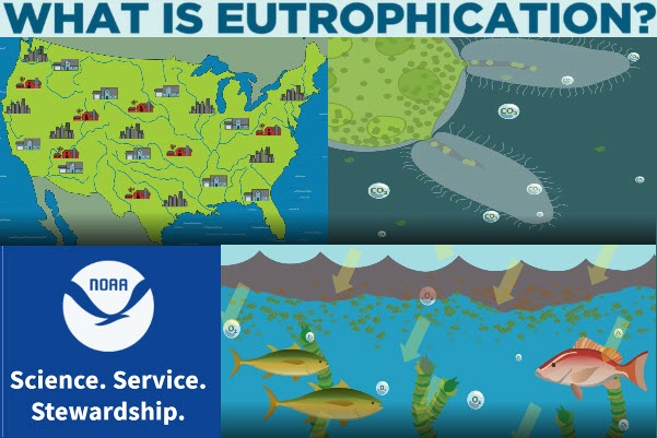 Collage of What is Eutrophication Video from NOAA. Image of US, Image of bacteria discharging carbon dioxide, NOAA logo, Image of fish breathing oxygen